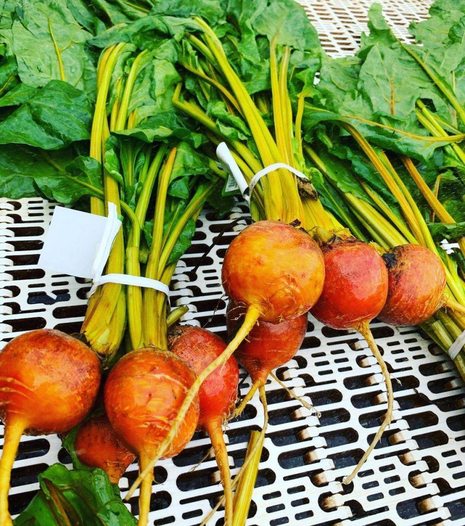 fresh golden beets